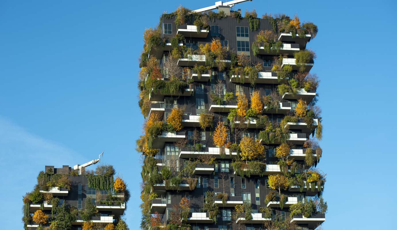 Buildings with trees on them