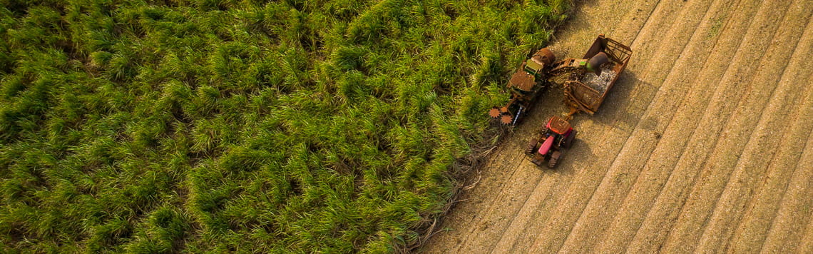 Aerial view of harvesting crops
