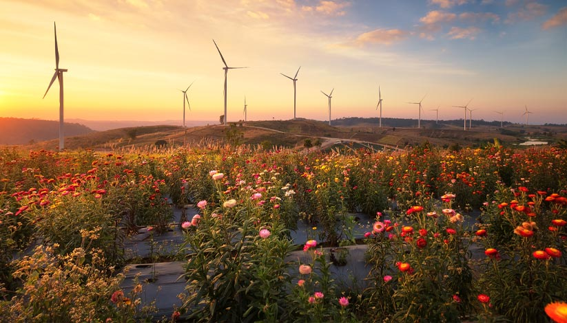 Flowers in field with wind turbines in the distance
